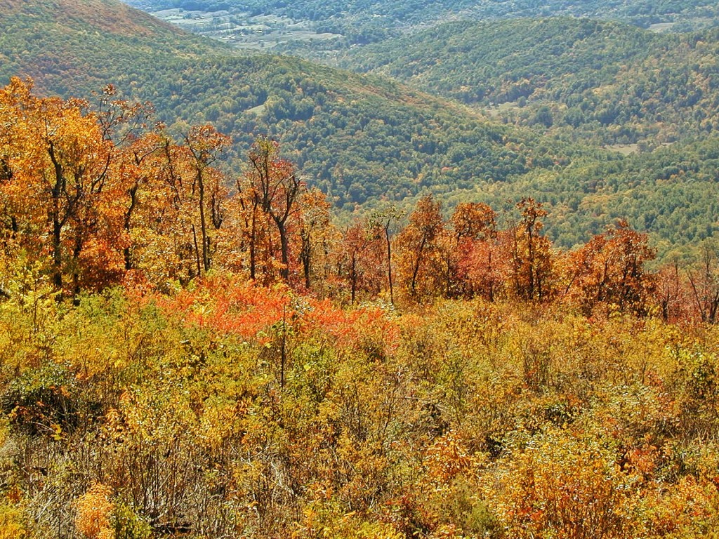 A mix of fiery red and lush green trees at the dawn of autumn in Shenandoah Valley.
