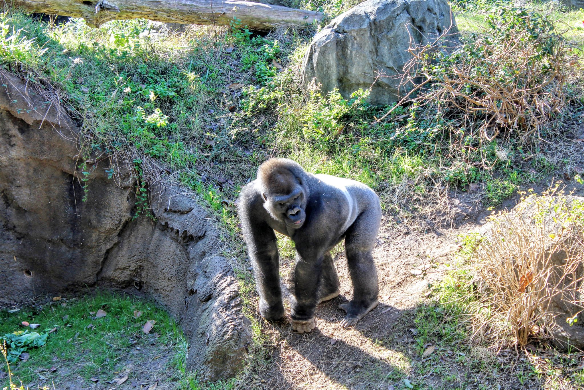 Best Zoos in the USA - handsome Rob
