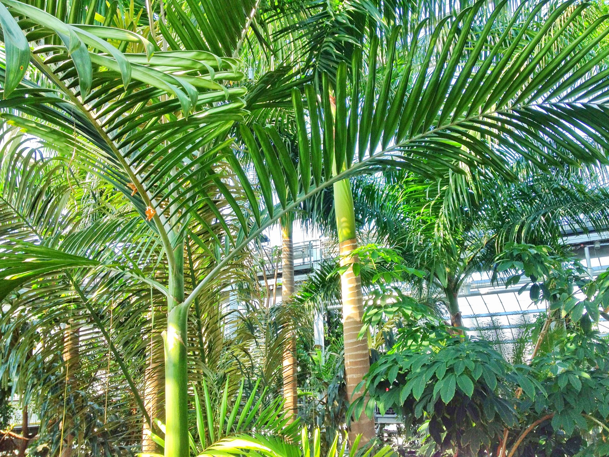 Guide to the Smithsonian: Look at all these amazing trees with big broad leaves in the Botanic Gardens