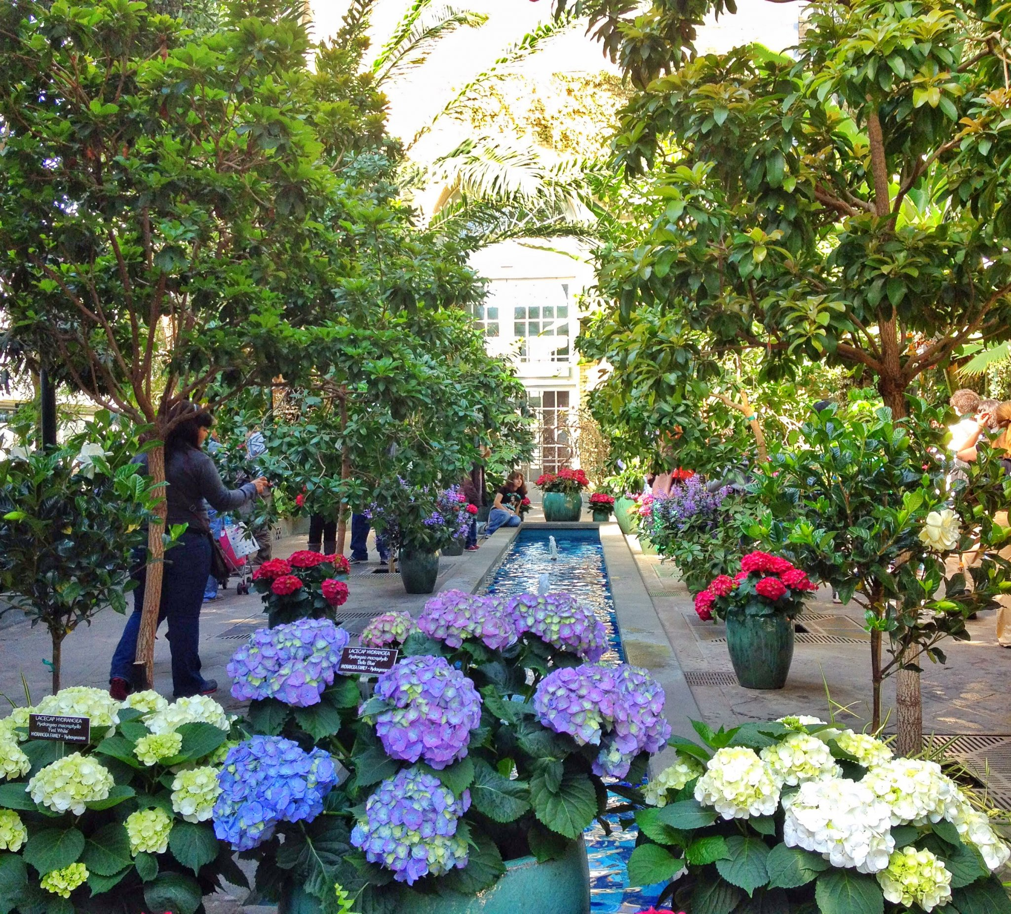 GuideToTheSmithsonian-Entrance is a hall of flowers with a small reflection pool