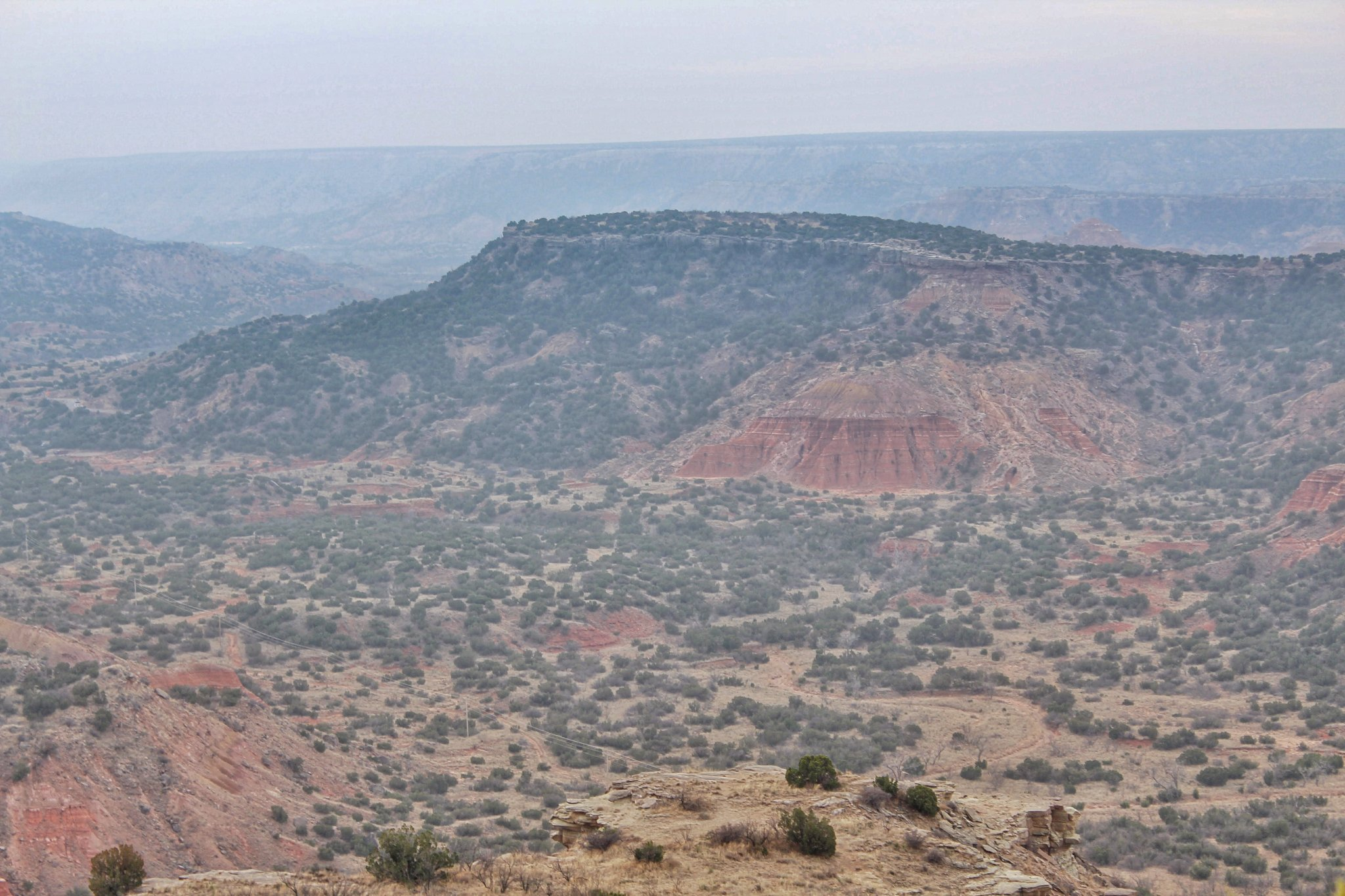 Exploring Palo Duro Canyon - Beautiful Shrubs dotting the landscape