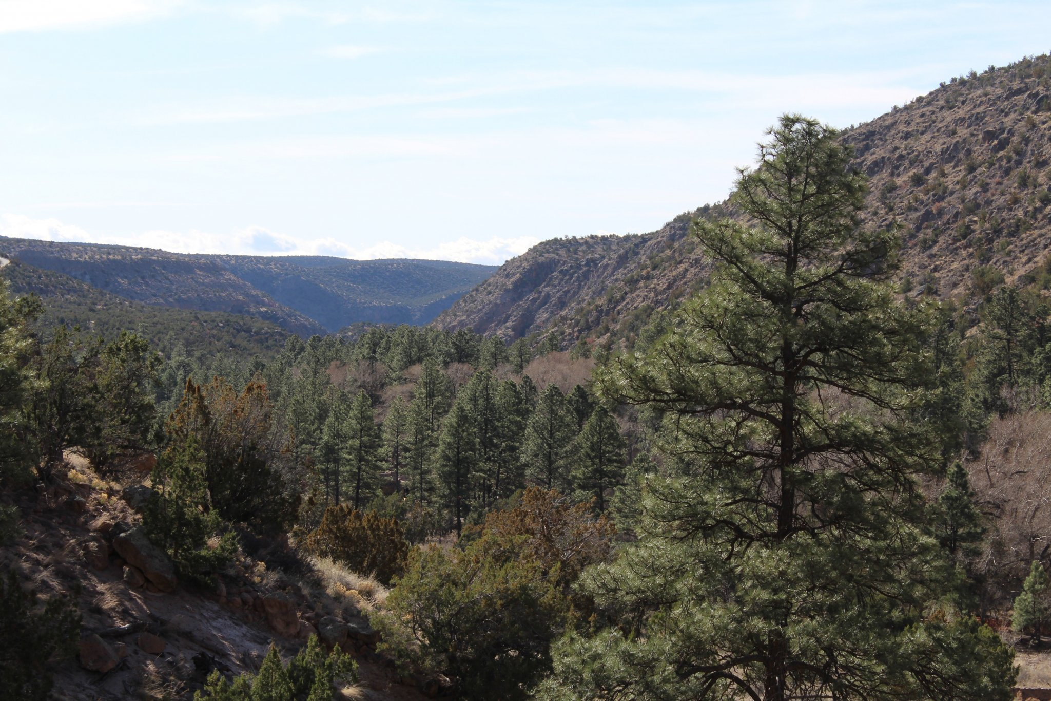 Day Trip from Santa Fe : Fairytale like woods that stretch for a while (cliff dwellings on other side)