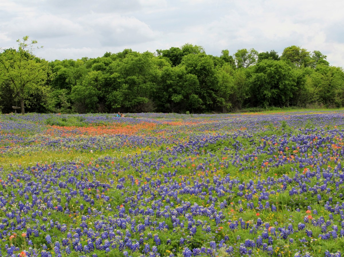 Towards the end of the lake in Meadow View Nature Area is one of the Best Places to See Bluebonnets in Ennis, Texas