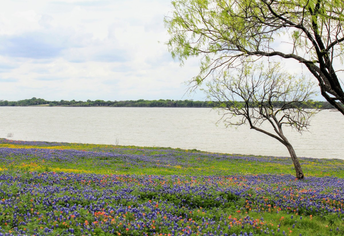 A frenzy of red, blue, and yellow - Meadow View Nature Area is one of the Best Places to See Bluebonnets in Ennis, Texas