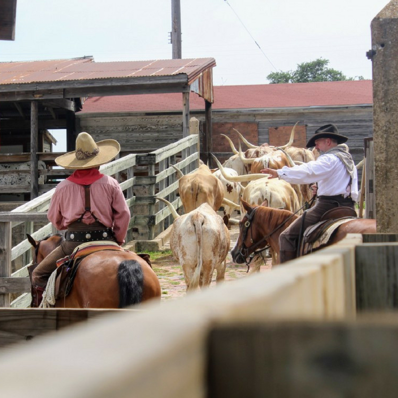 Looking for things to do at the Fort Worth Stockyards : check out these 5 things to do.