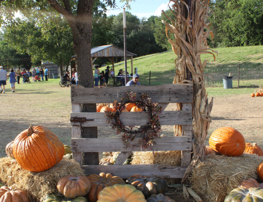 Hall's Pumpkin Farm featured image