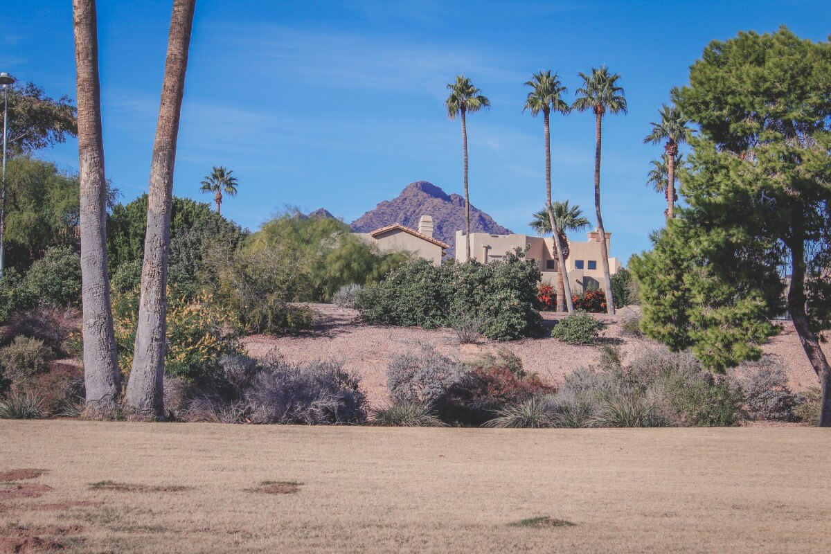 Camelback Mountain hidden behind homes and tall palm trees (like seriously though, how are the palm trees so tall).
