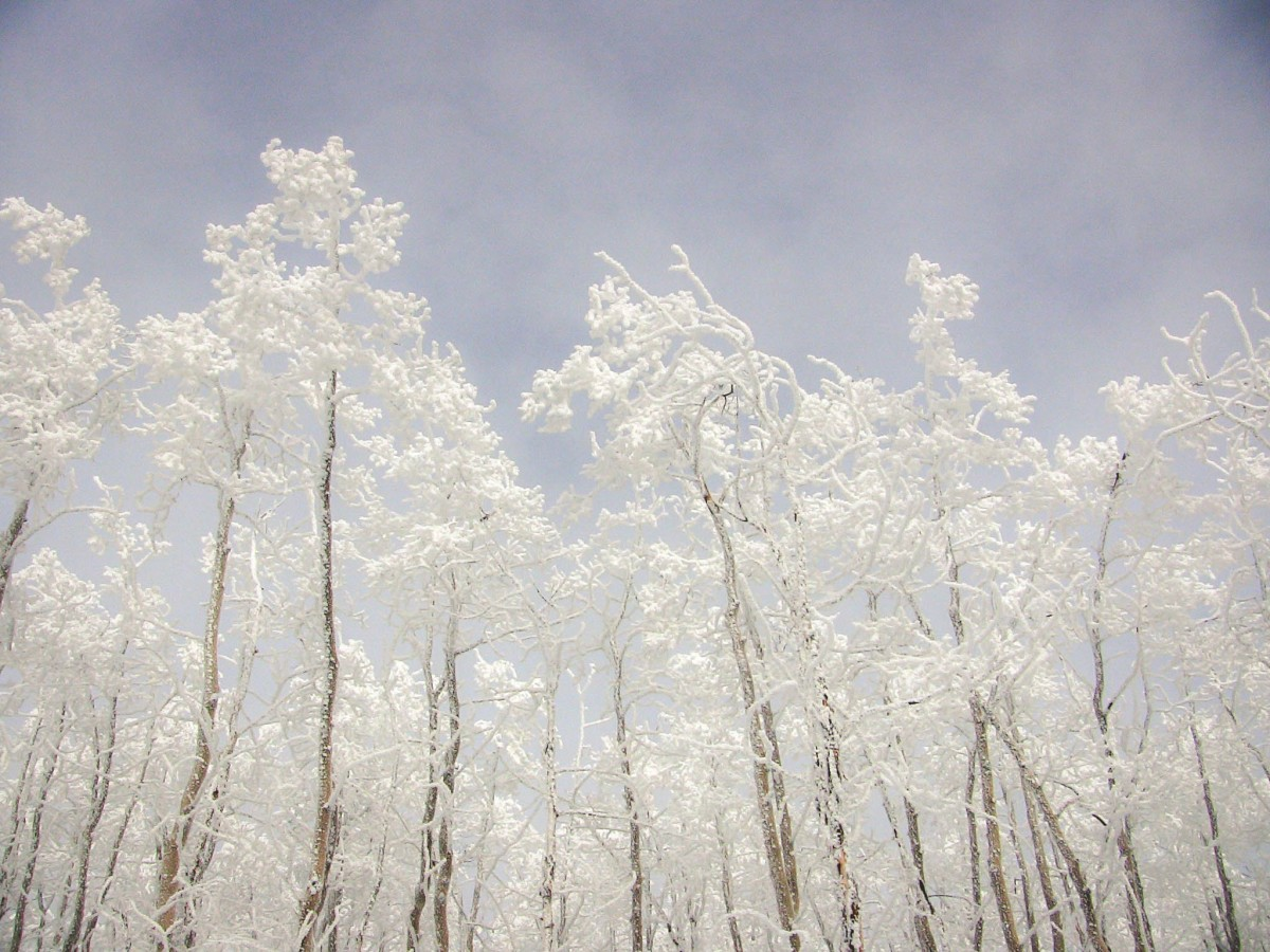 trees covered in snow during a winter in Santa Fe