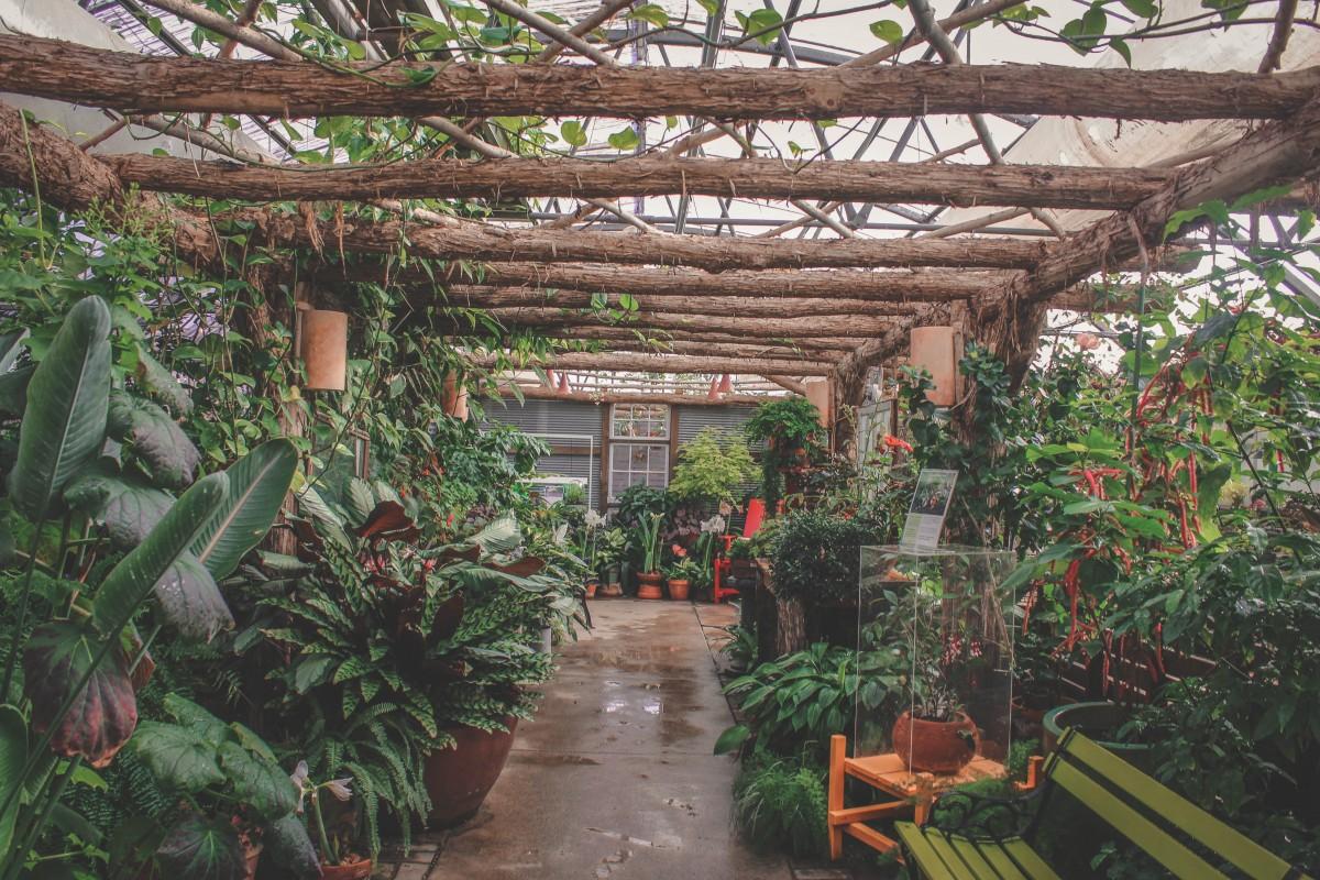 wet wash of leaves in Greater Des Moines Botanical Garden
