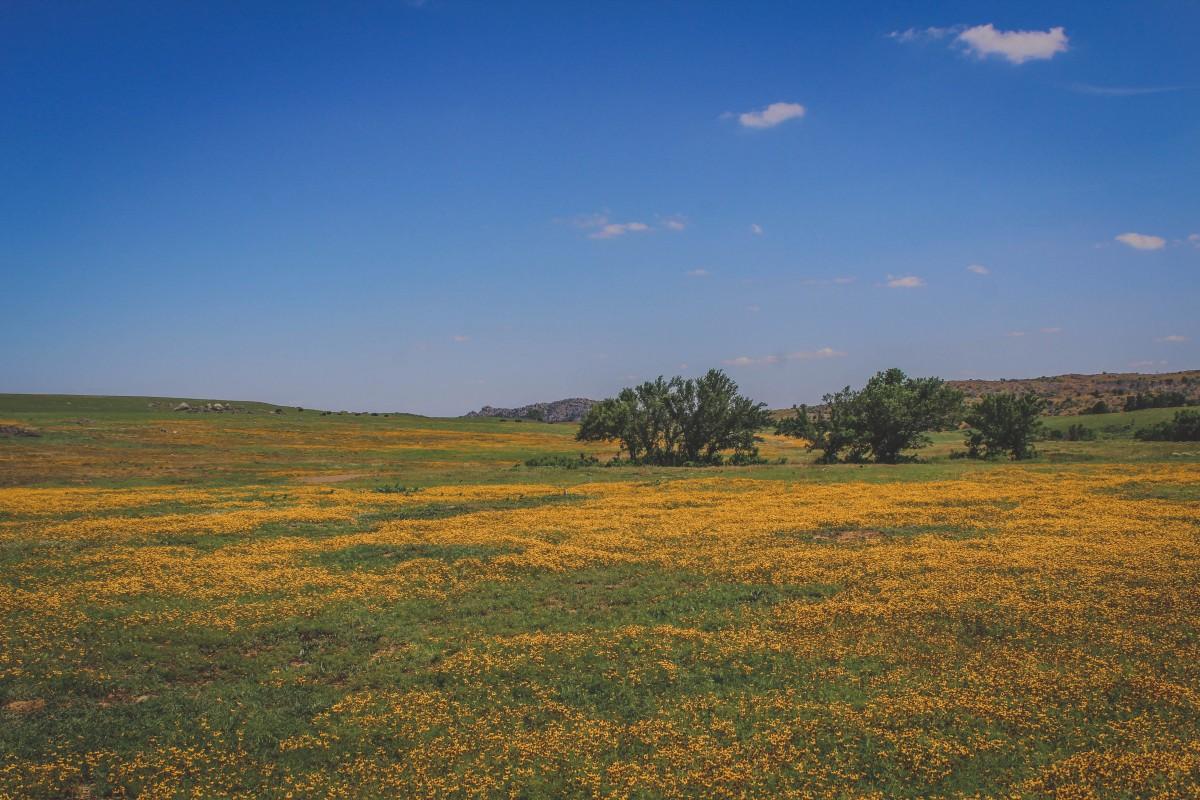 Wichita Mountains Wildlife Refuge In Summer