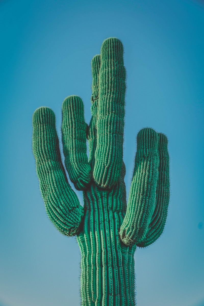 image of cacti from Unsplash to represent Cactus Park