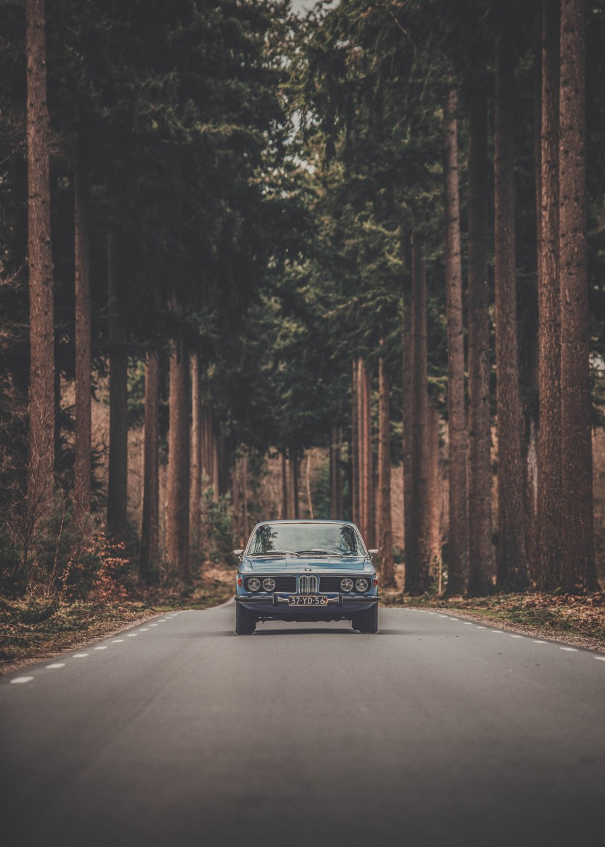 classic car on a forested road