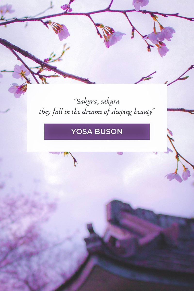 Sakura Sakura, they fall in the dreams of sleeping beauty