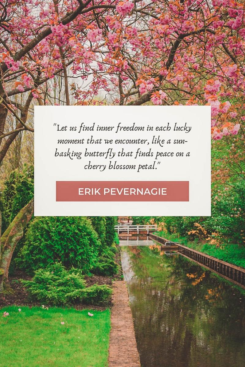 Cherry blossom quotes by Erik Pevernagie