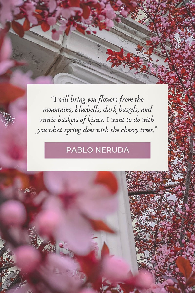 Cherry blossom quotes by Pablo Neruda