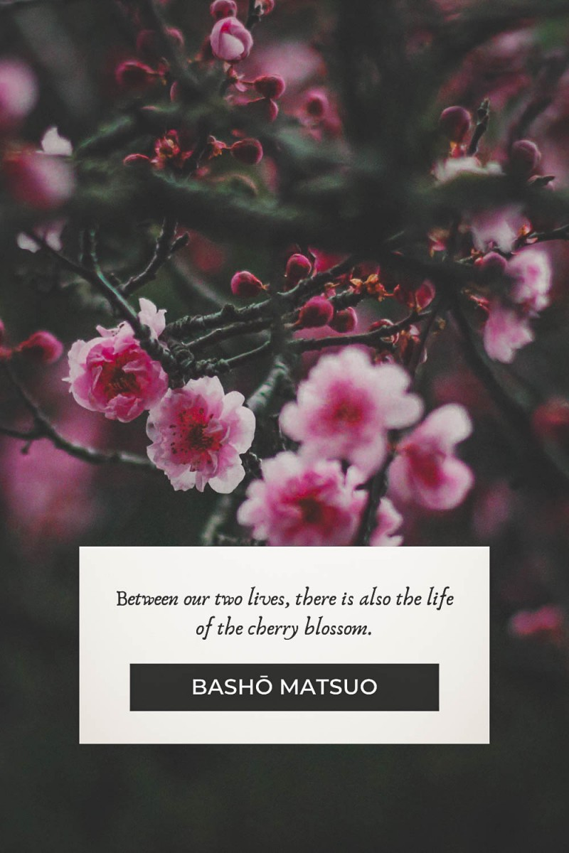 Cherry blossom quotes by Basho Matsuo