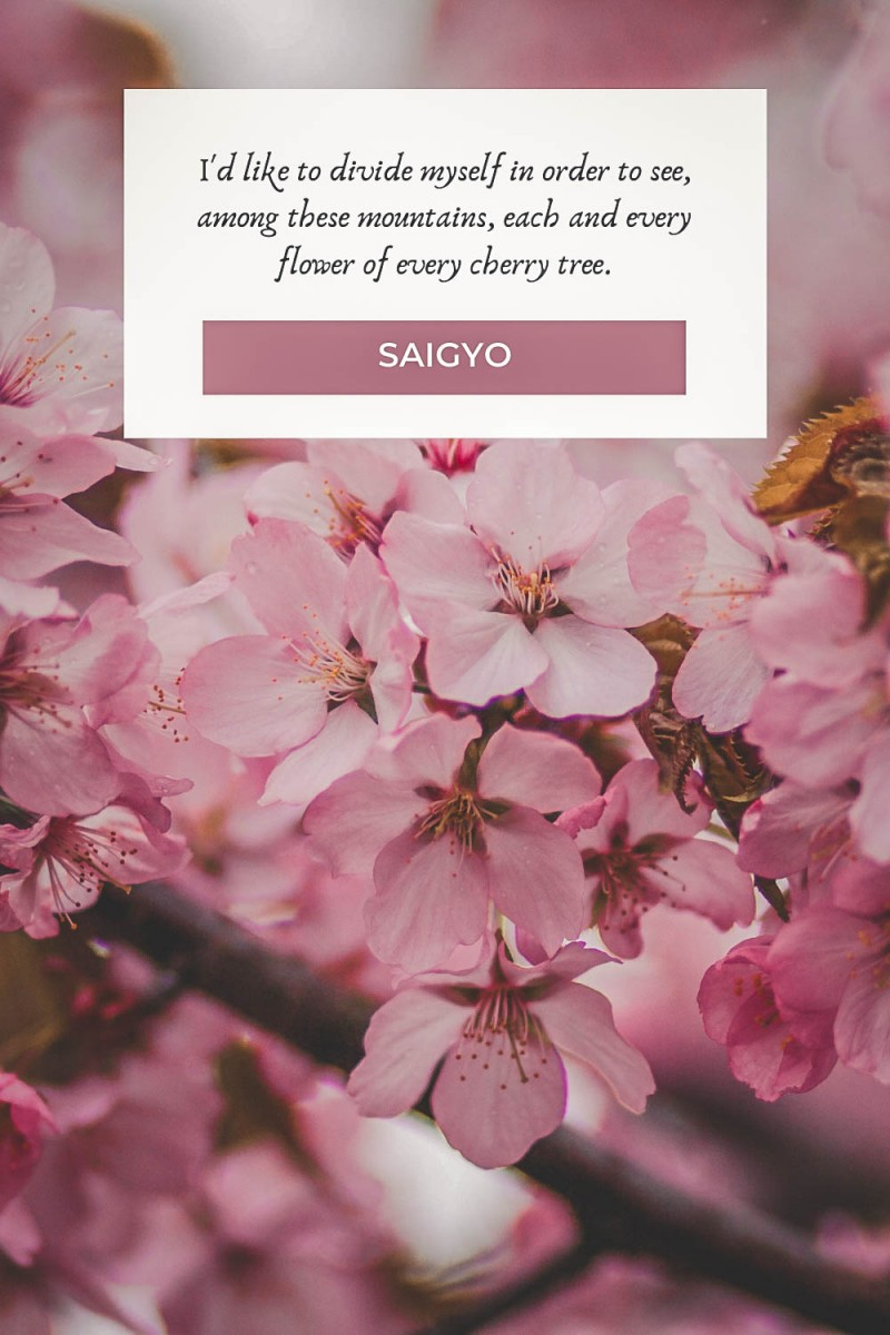 Cherry blossom quotes by Saigyo