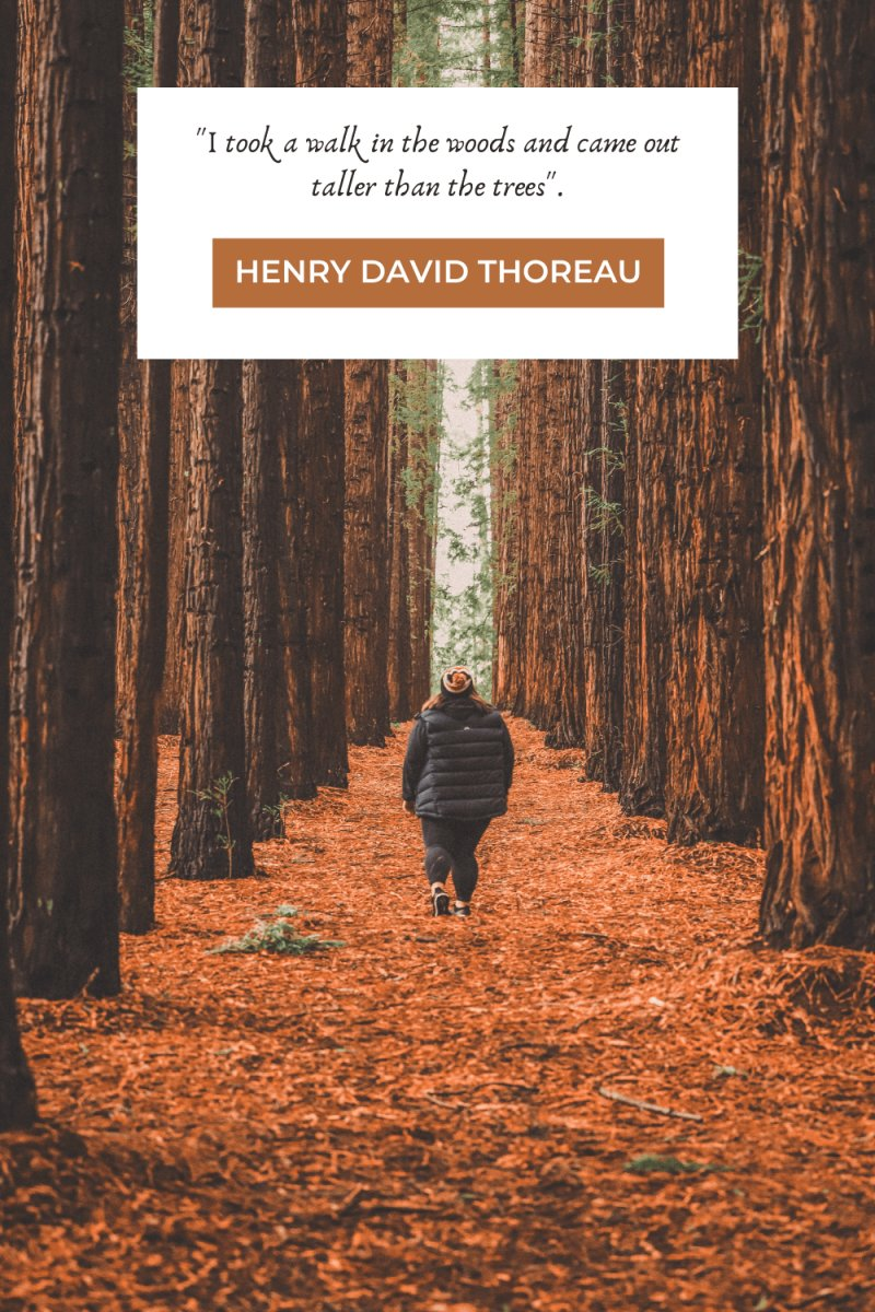 Hiking Quotes by Thoreau