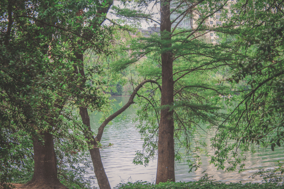 Things to do in Austin featured: trees near Lady Bird Lake