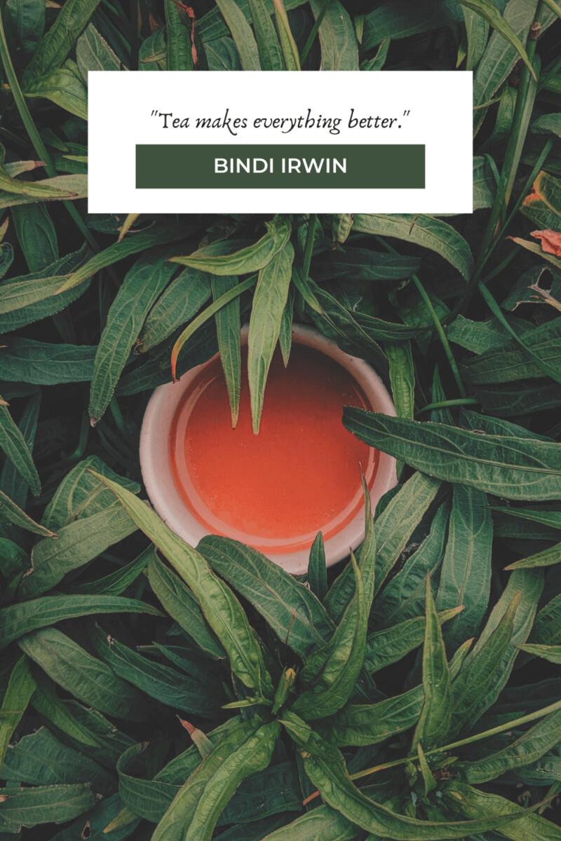 Bindi Irwin tea quotes
